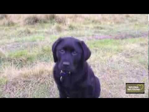 Puppy socialisation | worming | long walks and puppy party