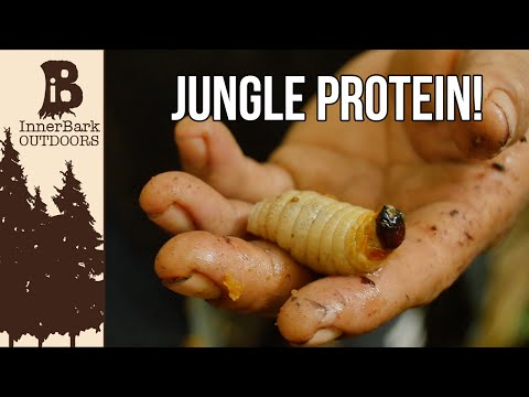 Best Jungle Protein? Life in the Amazon Jungle