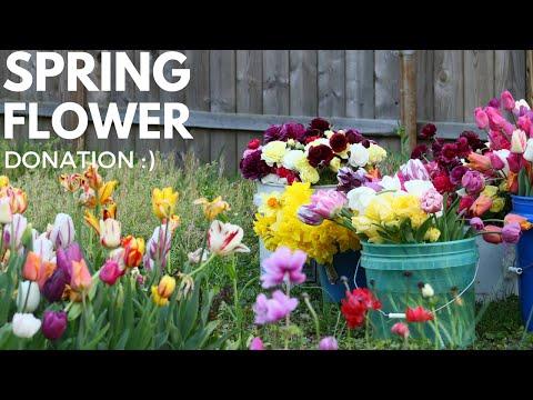 Spring Cut Flower