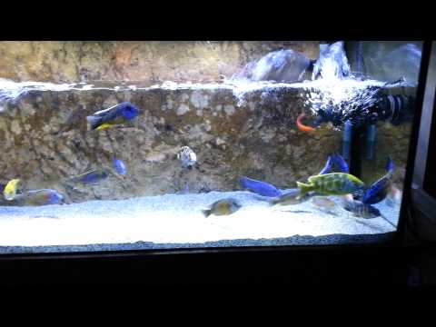 How to clean the rocks in your aquarium