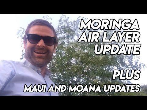 Ep170 - May Moringa Air Layer Update