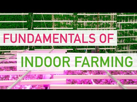 The Fundamentals Of Indoor Farming