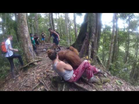 Xxx Mp4 Held Hostage By An Orangutan Bukit Lawang Jungle 3gp Sex