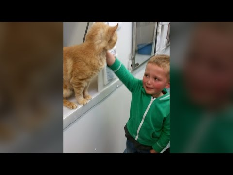 Little boy finds long-lost cat in rescue centre