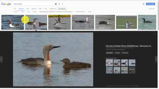 Como buscar recursos con Licenza Creative Commons