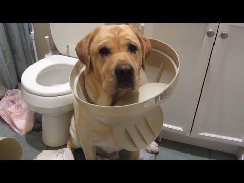The Top 29 Dog Fails: FailArmy Hall of Fame (December 2017)