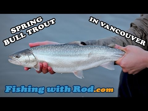 Fishing with Rod: Spring Bull Trout in Vancouver