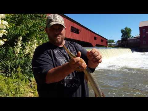 Gar Fishing - Fishing Below a Dam -