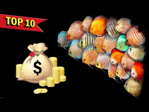 Top 10 Ways Aquarium and Fish keeping Hobby can earn you Money