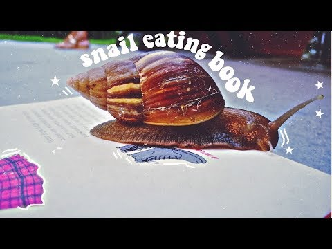 🐌[MUST WATCH] CUTEST THING YOU'LL SEE FROM A SNAIL 🌟 TIMELAPSE ⚫ TheWickeRmoss