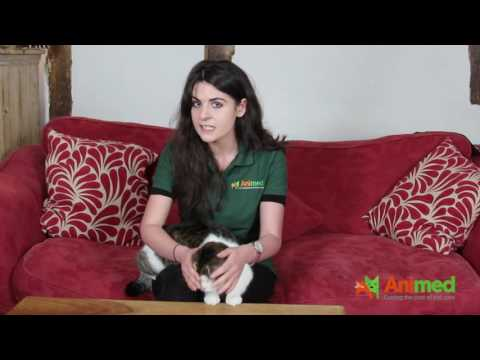 How to check for fleas and ticks on your cat
