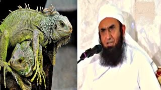 A Story of Dead Lizerd Maulana Tariq Jameel Special Bayyan 2016