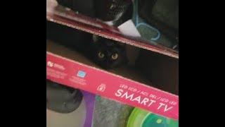 Cute cat playing in a long box