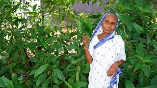 Grandma's Home Remedy To Get Rid Of Cough And Cold in Village Style