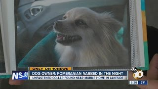 Dog owner: Pomeranian nabbed in the night