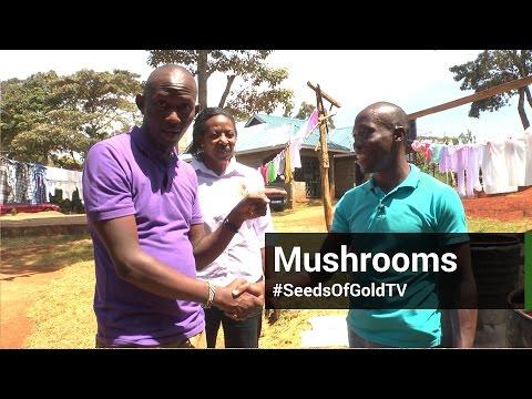 Mushroom Farming - Seeds Of Gold TV Season 2 Episode 4