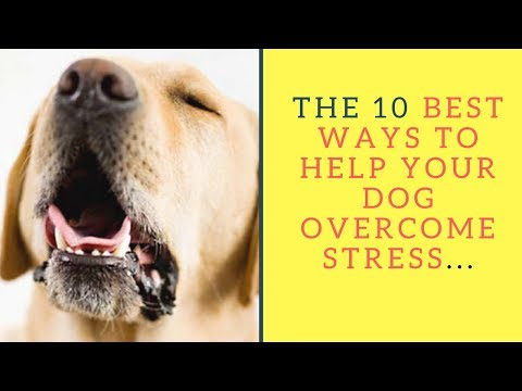 The 10 Best Ways To Help Your Dog Overcome Stress