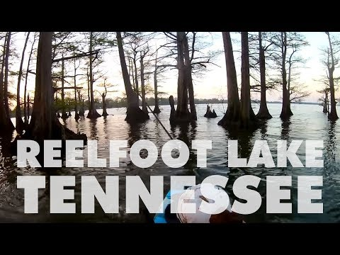 Fishing Reelfoot Lake TN for the first time!