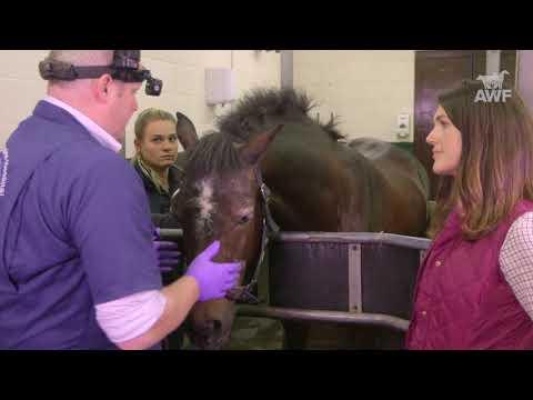 Teeth Care in Horses