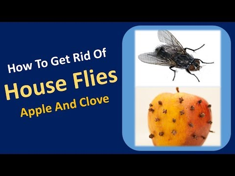 how to get rid of house flies | Apple and Clove  Home Remedy