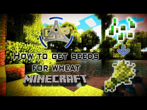 How to get seeds for wheat (MINECRAFT)