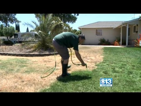 Forget Water: Brown Lawns Just Need A Coat Of Green Paint