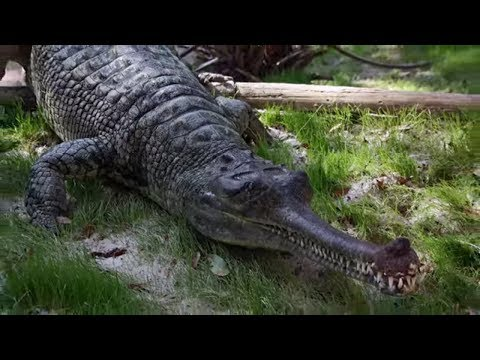 15 Large & WEIRD Prehistoric Crocs & Gators