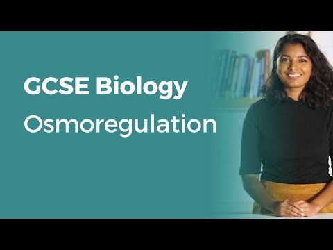 Osmoregulation | 9-1 GCSE Biology | OCR, AQA, Edexcel