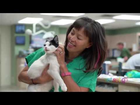 What does an emergency critical care veterinary specialist do?   VetSetGo