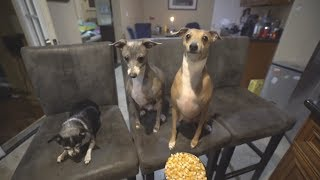 cooking show for our dogs