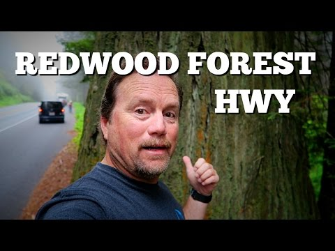 Driving The Redwood Forest Highway In California
