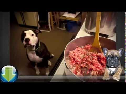 Natural Homemade Dog Food - The Right Choice For Your Pet