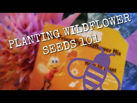 Wildflower Seeds: How To Get Them Started