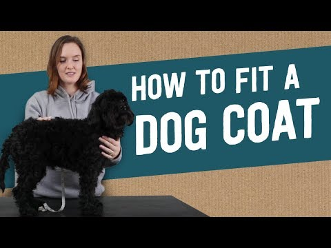 How to Fit a Dog Coat