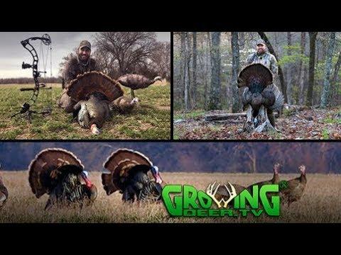 Turkey Hunting   Strategies for Strutting Toms (#439) @GrowingDeer.tv