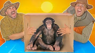 Whats in the Box CHALLENGE! (LIVE ANIMALS) SAFARI EDITION