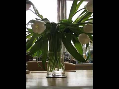 how to revive your tulips - just add water