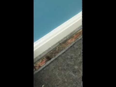 MOLD ON CARPET AND BASEBOARD TRIM IN BASEMENT - South Shore MA.