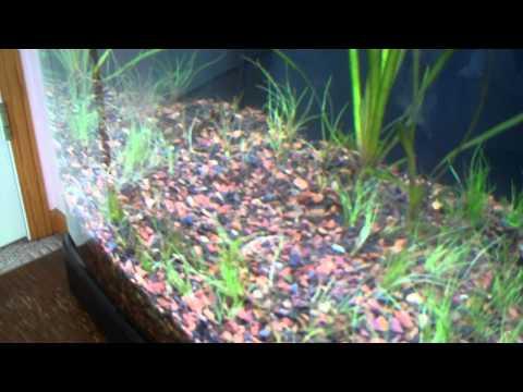 Updates- Fish tank setup plans (8/17/2011) RIP Pici
