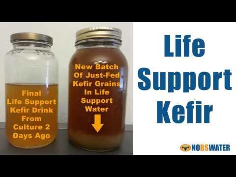Probiotics Are Easy Using Water Kefir Grains - Life Support Kefir