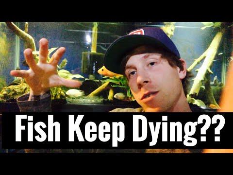 Aquarium Fish Keep Dying? What Am I Doing Wrong