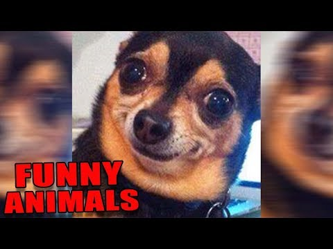 ANIMALS ON *CRACK* FUNNY! Will Give You Stomach Pains! (Funny Animals/Pets Videos Compilation) 2017