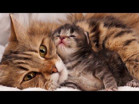 Mom Cat Loves Her Baby Kittens Very Much