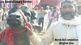 Interview with Owner of International champion Murrah bull Rustam