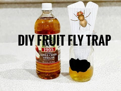 HOW TO GET RID OF FRUIT FLIES | diy fruit fly trap super simple and effective