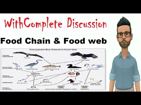 Food chain and food web |Complete Discussion And Notes|