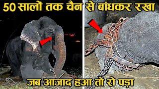 एक बेजुबान की दिल चीर देने वाली कहानी | Raju The Elephant Cries After Being Rescued