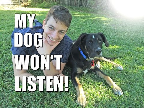 Why Your Dog Won't Listen to You Outside and How to Change It!