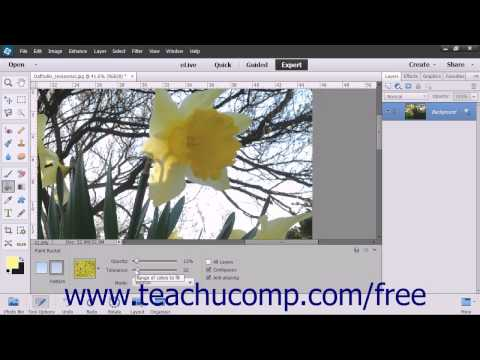 Photoshop Elements 13 Tutorial Using the Paint Bucket Tool Adobe Training