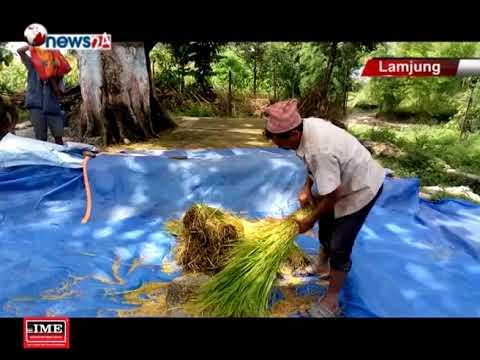 काम गर्ने मान्छे नहुँदा चैते धान थन्क्याउन र बर्षे धाउन लाउन सास्ती - NEWS24 TV